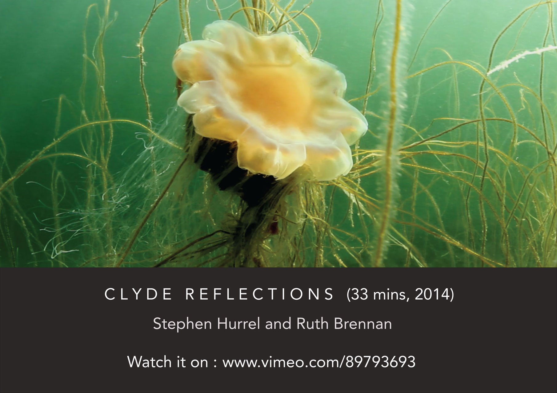 CR_jellyfish_VIMEO_Oct_WEBSITE_1280